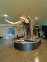 野尻湖ナウマンゾウ博物館
