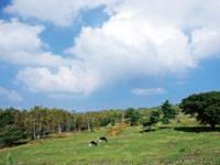 菅平牧場・写真