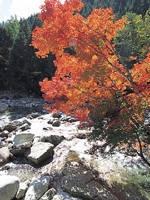 赤沢自然休養林・写真