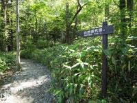 上高地自然研究路・写真