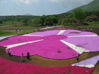 旬花咲く黒姫高原・写真
