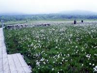 田代平湿原・写真