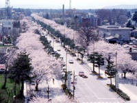 「官庁街通り」(駒街道)・写真