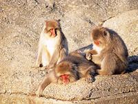 むつ市脇野沢野猿公苑・写真