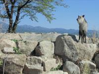 飯田市立動物園・写真