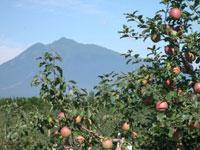 弘前市りんご公園・写真