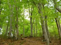 白神の森 遊山道・写真