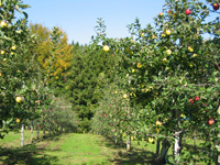 りんご観光農園・写真