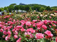 花フェスタ記念公園・写真