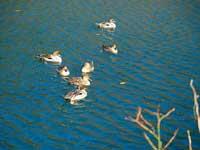 松尾池・萩の滝・写真
