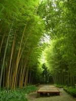 富士竹類植物園・写真