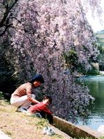 野守の池・写真