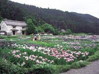 加茂荘・加茂花菖蒲園・写真