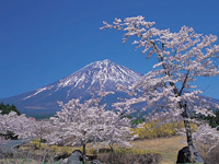 富士桜自然墓地公園・写真