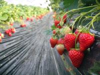 赤ずきんちゃんのおもしろ農園・写真