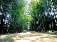竹林の小径・写真