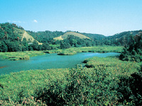 桶ケ谷沼・写真