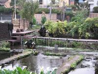 三島梅花藻の里・写真