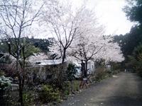 新富士オートキャンプ場・写真