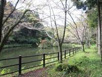 富士市保健休養林野田山健康緑地公園金丸山広場・写真