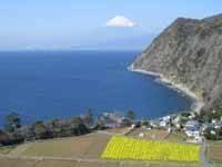 煌めきの丘・写真