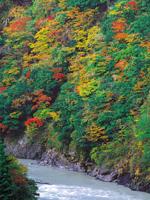 接阻峡の紅葉・写真