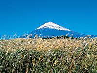 ススキと富士山・写真