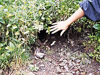 中山風穴地特殊植物群落・写真