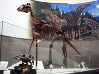 豊橋市自然史博物館・写真