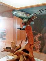 鳳来寺山自然科学博物館・写真
