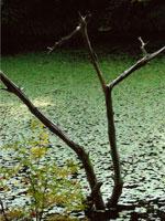 根池・写真