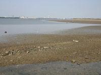汐川干潟・写真