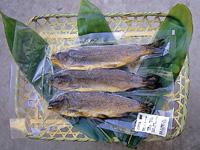 富士養鱒漁業協同組合・写真