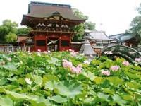 伊賀八幡宮・写真
