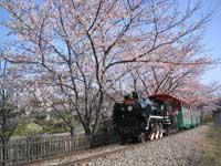 碧南市明石公園・写真