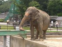 岡崎市東公園動物園・写真