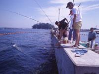篠島釣り天国・写真