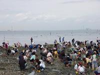 美浜町東海岸(上村・大池・河和口・矢梨) 潮干狩り・写真