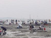 吉田海岸 潮干狩り・写真