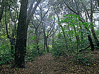 森林浴遊歩道・写真
