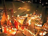 神奈川県立生命の星・地球博物館