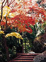 笠置山・写真