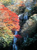 白滝・写真