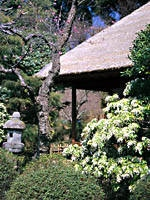 京王百草園・写真