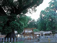 尾鷲神社・写真