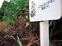 出島野鳥園・写真