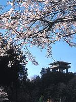 桜山展望台・写真