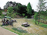 デイキャンプの森・写真