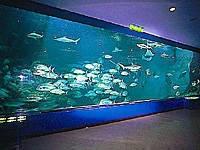 和歌山県立自然博物館・写真