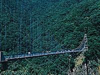 綾の照葉大吊橋周辺のサクラ・写真